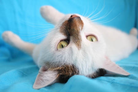 impish: White playful cat relaxing on the couch Stock Photo