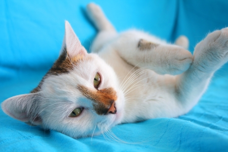 short back: White playful cat relaxing on the couch Stock Photo