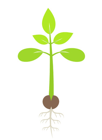 Green plant seedling. Illustration