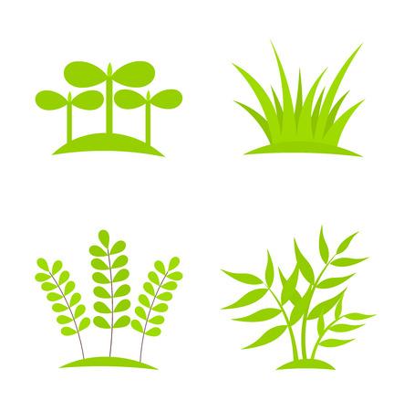 plants growing: Le piante verdi crescente collezione. Vettoriali