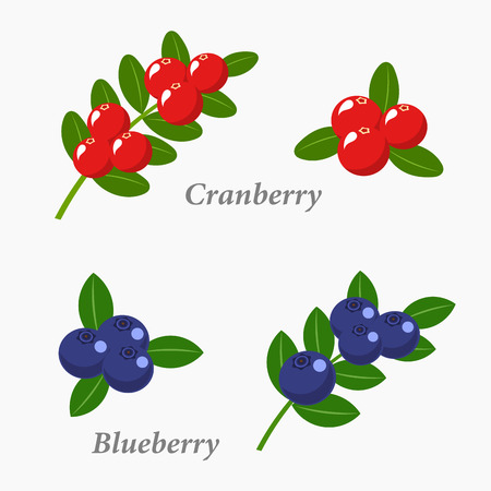 whortleberry: Cranberries and blueberries. Berry fruit vector illustration