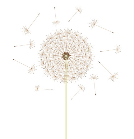 Spring dandelion flower. Vector illustration Vector