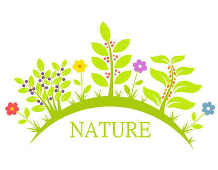Flowers and plants, nature concept. Vector illustration Vector