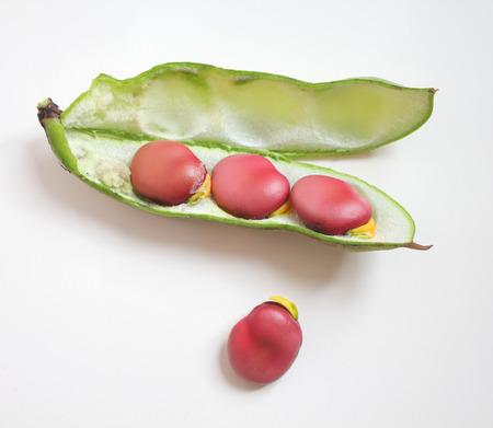 broad: Red fresh broad beans in green pod. Kermazyn variety