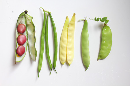 french bean: Different kinds of legumes : green and yellow beans, pea, broad bean