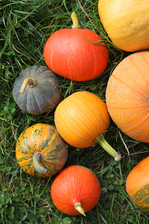 Winter squashes and pumpkins harvest in the garden photo