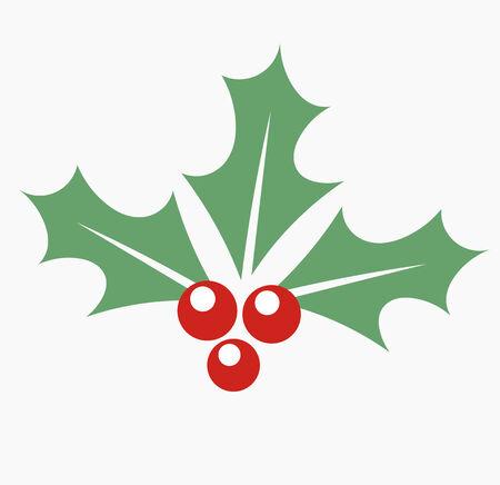 aquifolium: Christmas plant holly berry.