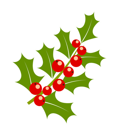 aquifolium: Holly berry branch, Christmas symbol. Vector illustration Illustration