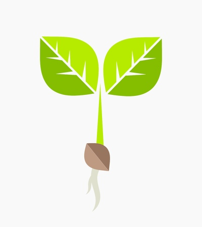 seed growing: Plant seedling. Vector illustration