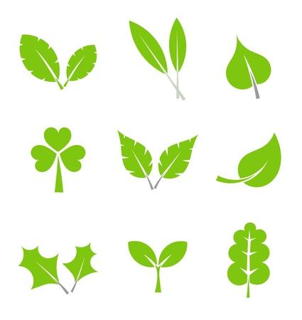 flora  vector: Leaf collection. Vector illustration