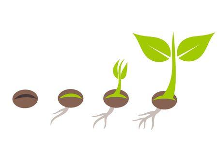semilla: Etapas de germinación de semillas de plantas. Ilustración vectorial