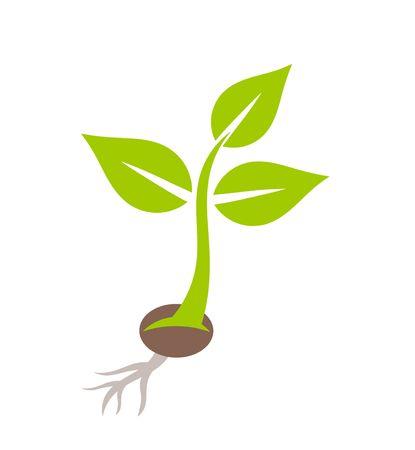 seedling: Plant seedling. Vector illustration