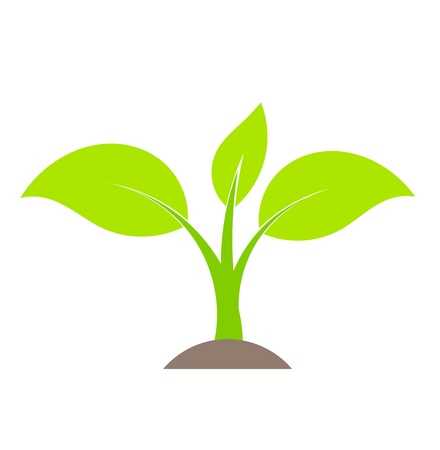 Spring plant growing from soil. Vector illustration