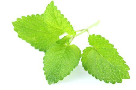 fresh leaf: Herb lemon balm fresh leaf over white background Stock Photo