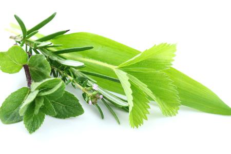 green herbs: Fresh green herbs on white background