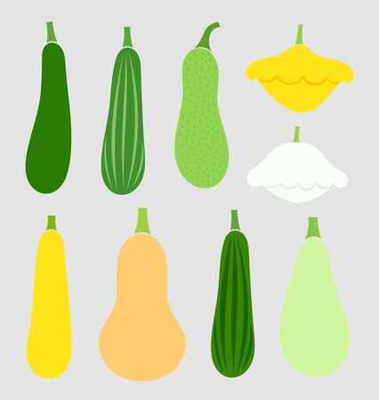 squash: Summer squash vegetables collection. Vector illustration