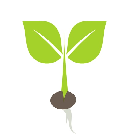 seed growing: Little plant growing from seed illustration Stock Photo