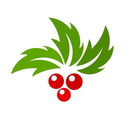 houx: Baies de houx. Vector illustration Illustration