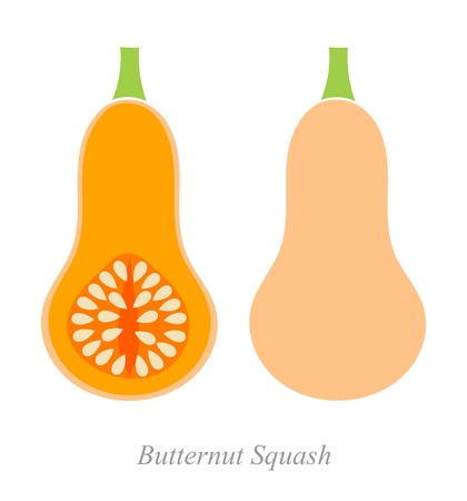 simple cross section: Butternut squash. Vector ilustration
