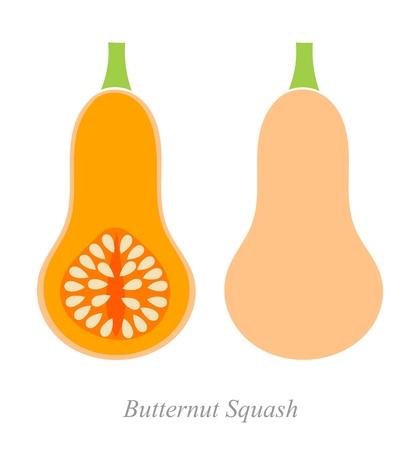 butternut squash: Butternut squash. Vector ilustration