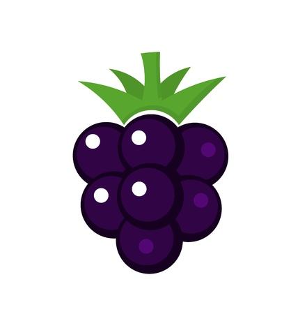 blackberries: Blackberry fruit. Vector illustration