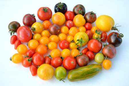 tomate: Tomate - mix collection couleurs Banque d'images