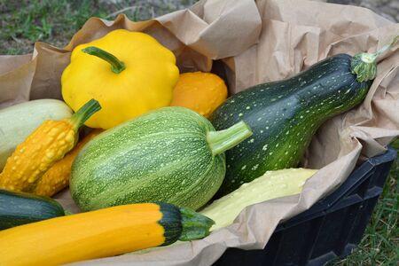 autumn colour: Summer squash harvest Stock Photo