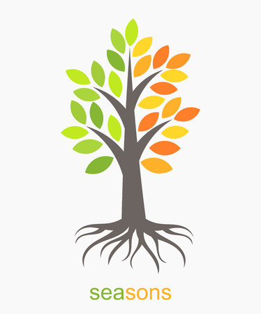 root: Autumn and spring seasons tree. Vector illustration