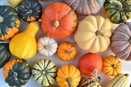 Pumpkins and squashes top view Stock Photo