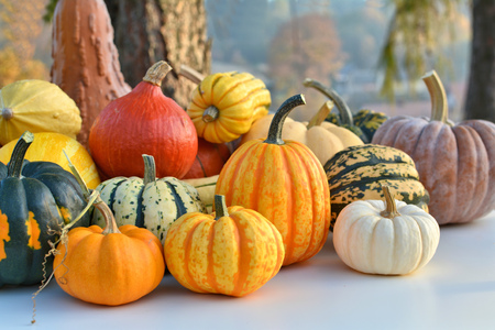 squash: Varieties of pumpkins and squashes collection. Outdoor shot