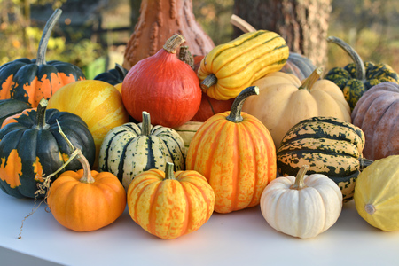 outdoor shot: Varieties of pumpkins and squashes collection. Outdoor shot