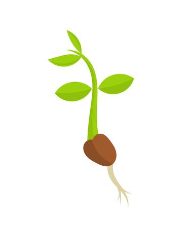 Poco germinazione vegetale piantina. illustrazione