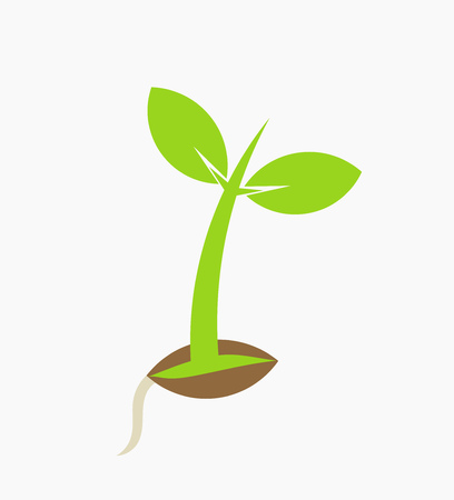 Young plant seedling germination. Vector illustration Illustration