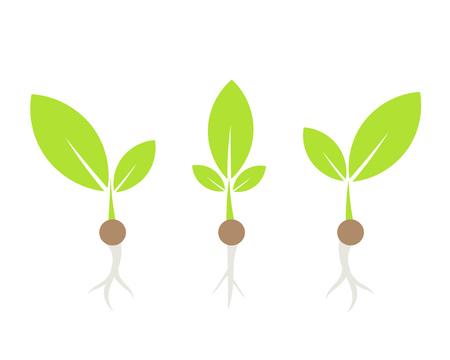 germinación: Tres pequeñas plantas. ilustración vectorial