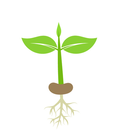 germinate: Plant seedling with roots. Vector illustration