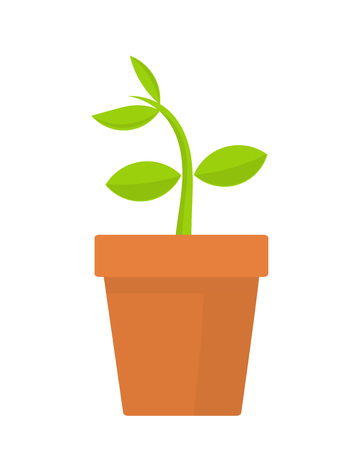 germinate: Plant growing in pot. Vector illustration