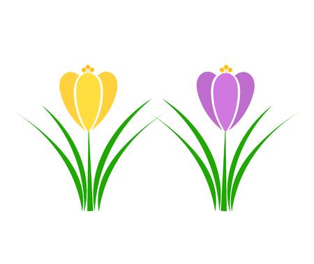 Dos flores de la primavera del azafrán.