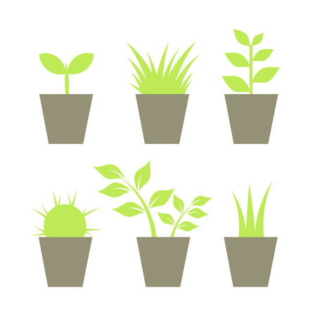 seedlings: Houseplants in pots collection. illustration
