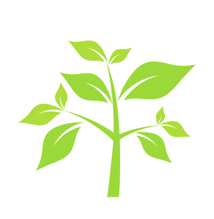 young leaves: Green plant. Vector illustration Illustration