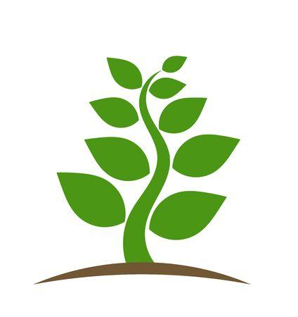planta de frijol: Green plant icon. Vector illustration