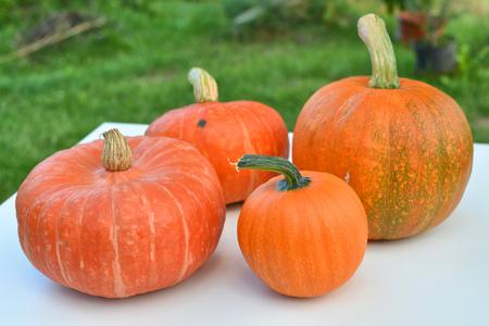 varieties: Pumpkins different varieties harvest