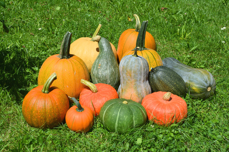 Group of vegetable sweet squashes and pumpkins