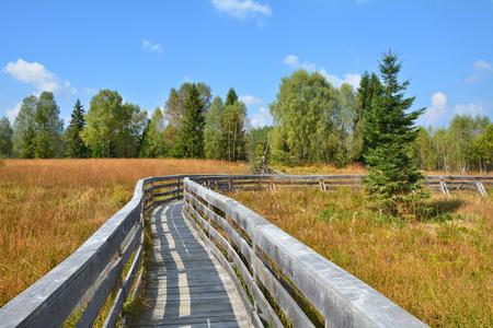 turba: Path through the peat bog in Poland Bieszczady National Park Foto de archivo