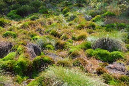 turba: Peat bog moss in Poland Bieszczady National Park Foto de archivo