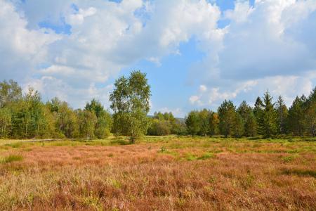 turba: turbera en el Parque Nacional de Polonia Bieszczady