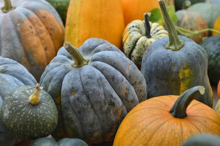 varieties: Group of pumpkins varieties
