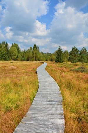 mire: Wooden path through the peat bog in Poland Bieszczady National Park