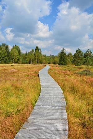 turba: Wooden path through the peat bog in Poland Bieszczady National Park