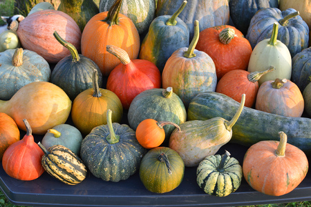 Pumpkins and winter squashes varieties, autumn harvest Stock Photo