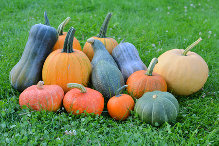Colorful pumpkins and squash autumn harvest. Different varieties Stock Photo